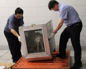 Hactl helps Air Canada Cargo to re-home Arctic foxes